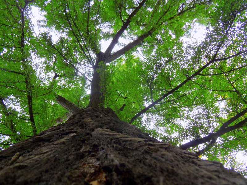 Firenze, alberi tagliati per errore a Porta al Prato: saranno ripiantati