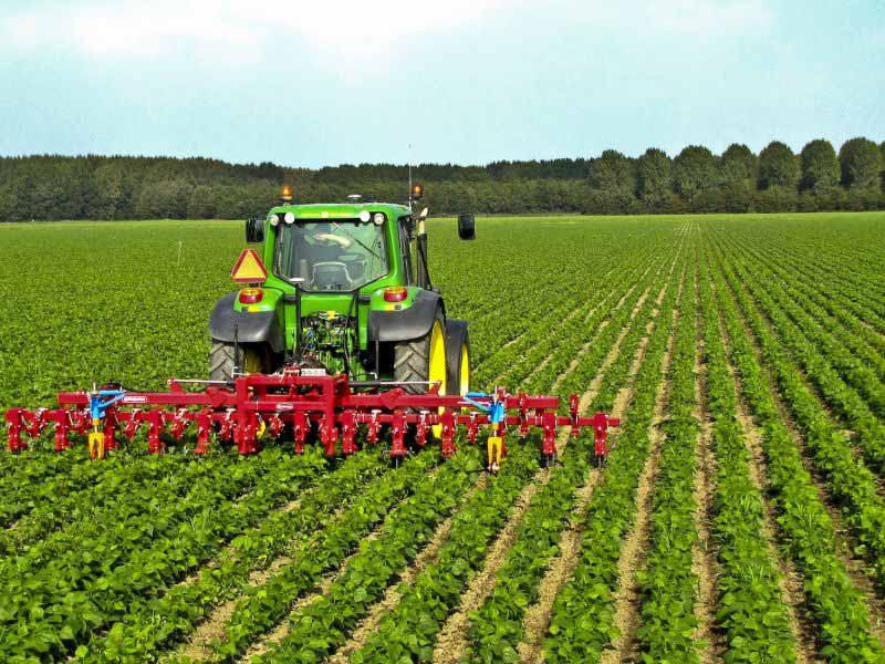 Bando giovani agricoltori Toscana