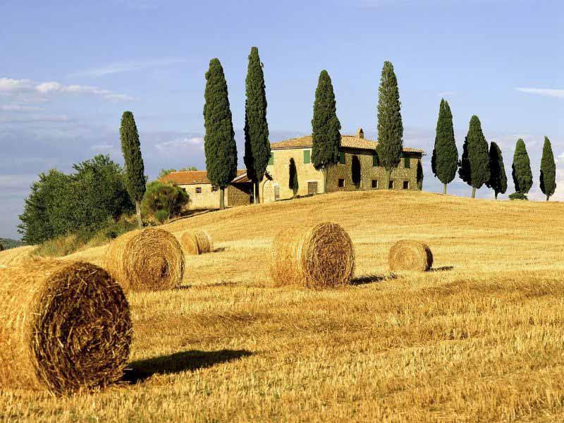 Psr 2016 toscana - Bandi agricoltura e giovani agricoltori toscani