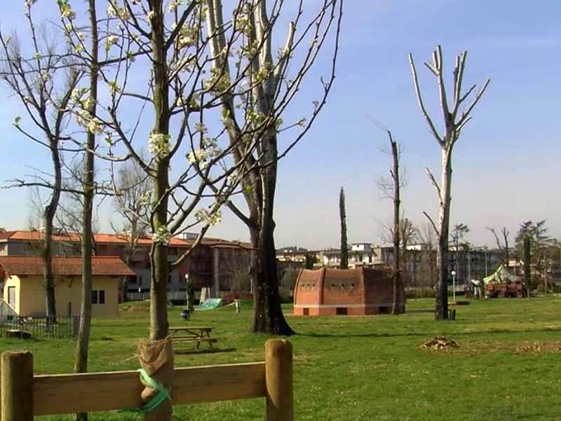 Anconella nuovi alberi