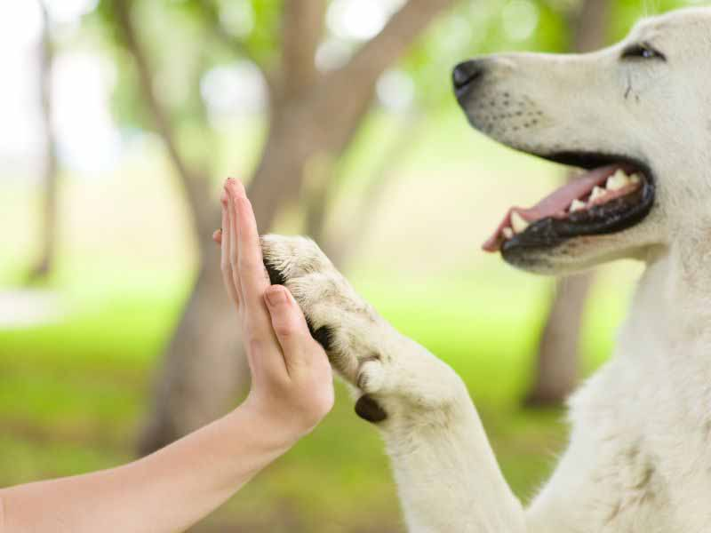 Pet Therapy Firenze