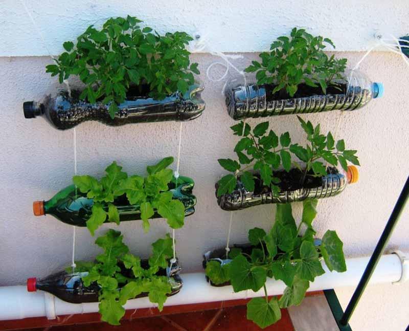I consigli per fare un orto sul terrazzo - ilReporter.it