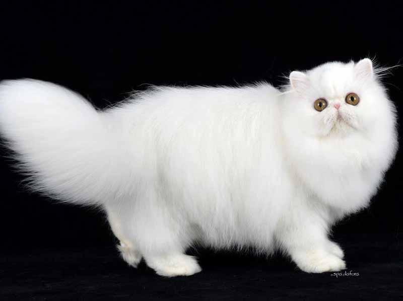 Gatti mai visti in mostra alla fortezza - Ansa bagno a ripoli ...