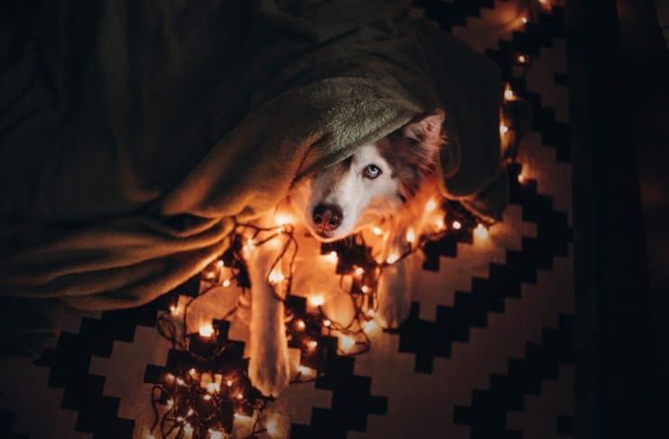 Capodanno: botti e petardi, ecco come proteggere gli animali. Il decalogo