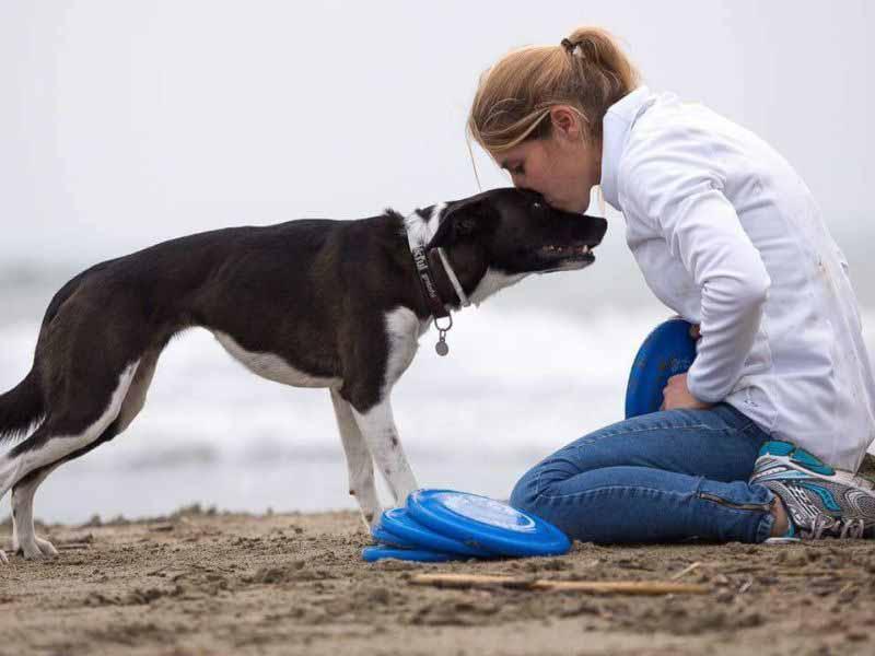 Siti di incontri amanti degli animali