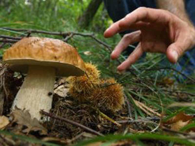 Al via la stagione dei funghi. Dove, come e quando cercarli