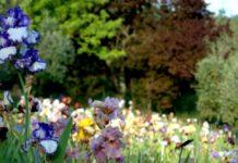 giardino iris firenze orario 2019 piazzale Mchelangelo