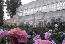 Mostra Fiori Firenze 2019 giardino Orticoltura