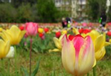 Parco Tulipani Scandicci campo Cnr