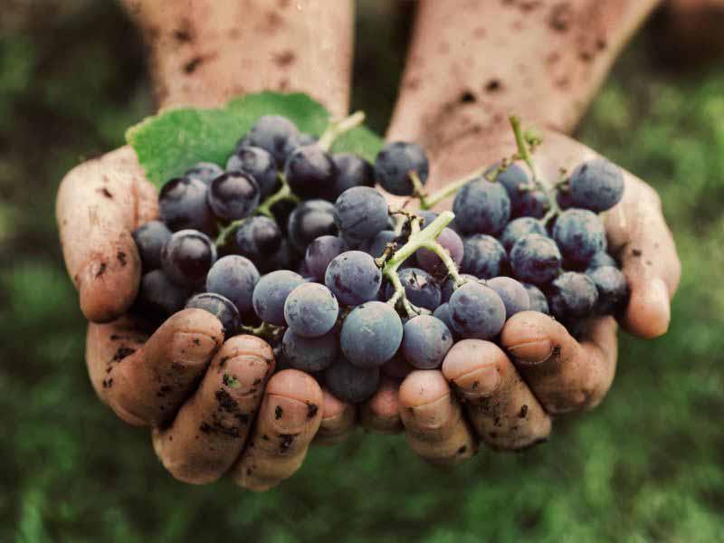 tour delle cantine - wine tour Toscana