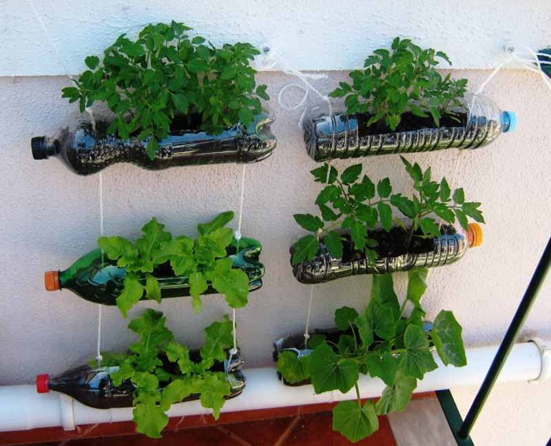 I consigli per fare un orto sul terrazzo