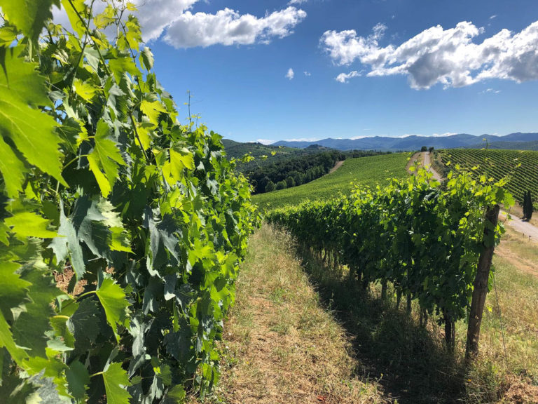 """Wine tour in Toscana: tra cantine e degustazioni """"olistiche"""""""