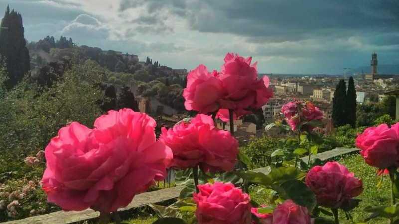 Giardino Rose Firenze fioritura panorama