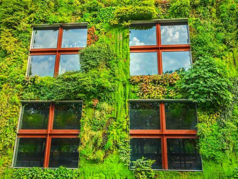 Piante sulle facciate, per salvare il pianeta. Intervista a Stefano Mancuso