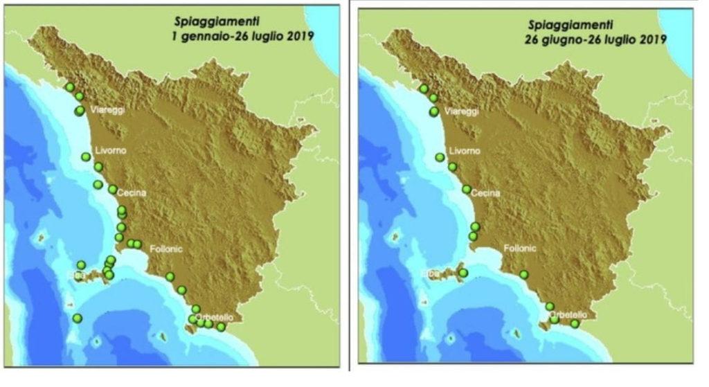 Delfini spiaggiati Toscana mappa Arpat