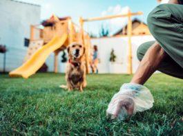 Dog plogging insieme al proprio cane a Firenze