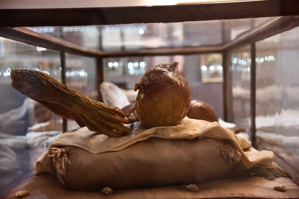 Natura collecta Natura exhibita cere Specola
