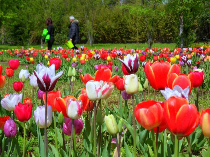 Parco tulipani Scandicci Wander and Pick 2020