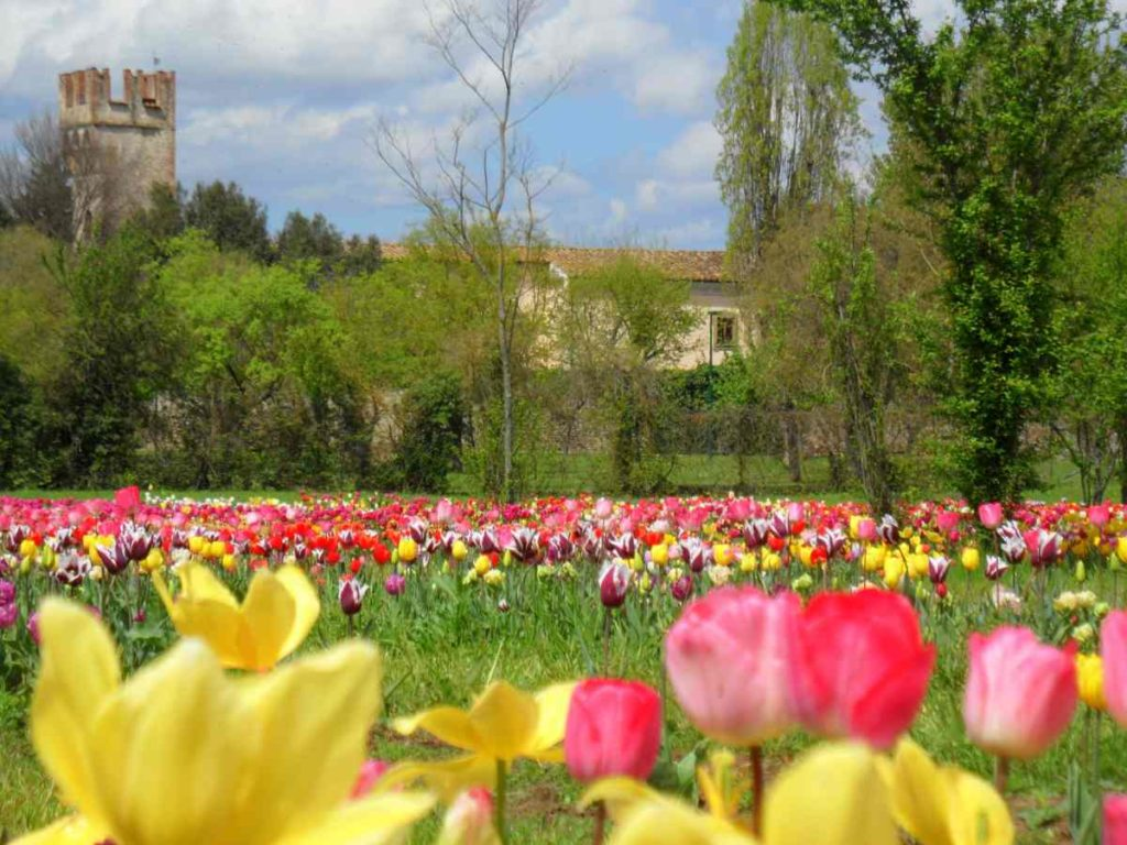 Tulipani parco Acciaolo Scandicci Firenze
