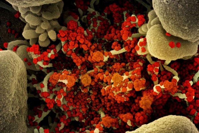 Coronavirus Toscana 20 agosto casi dati bollettino Regione notizie