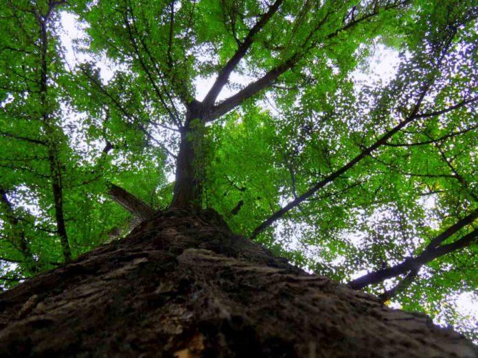 dona un albero firenze