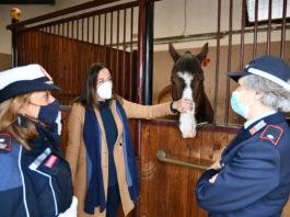 A Firenze visite didattiche (online) con gli agenti a cavallo