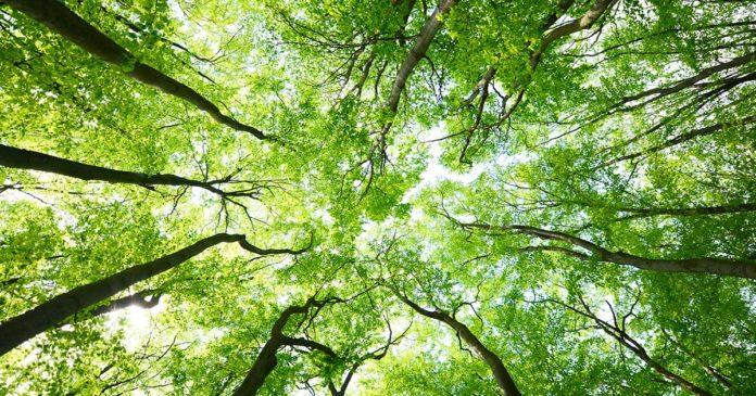 la salute degli alberi