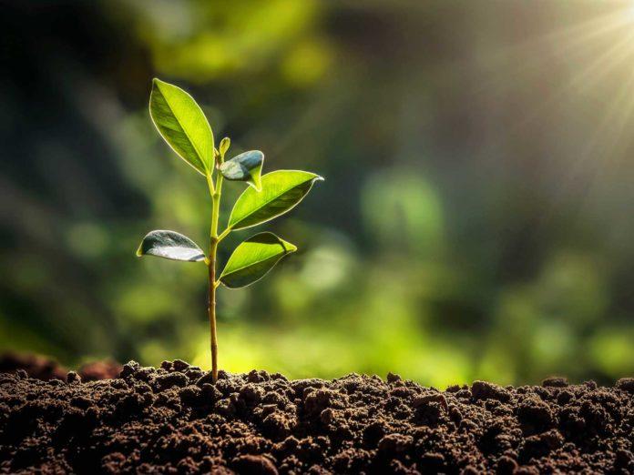 In arrivo bando per 20 milioni per l'agricoltura sostenibile