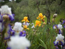 giardino degli iris firenze 2021 apertura orari concorso