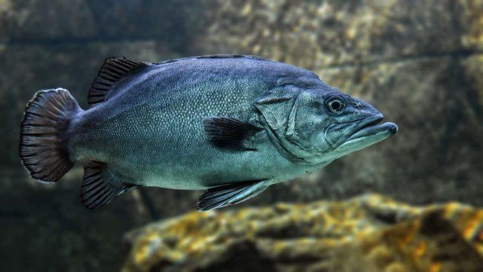 coprifuoco anticipato firenze pesce aprile 2021