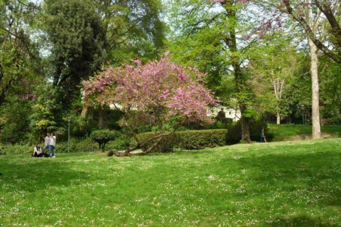 Dona albero Comune Firenze 2021 regala adotta